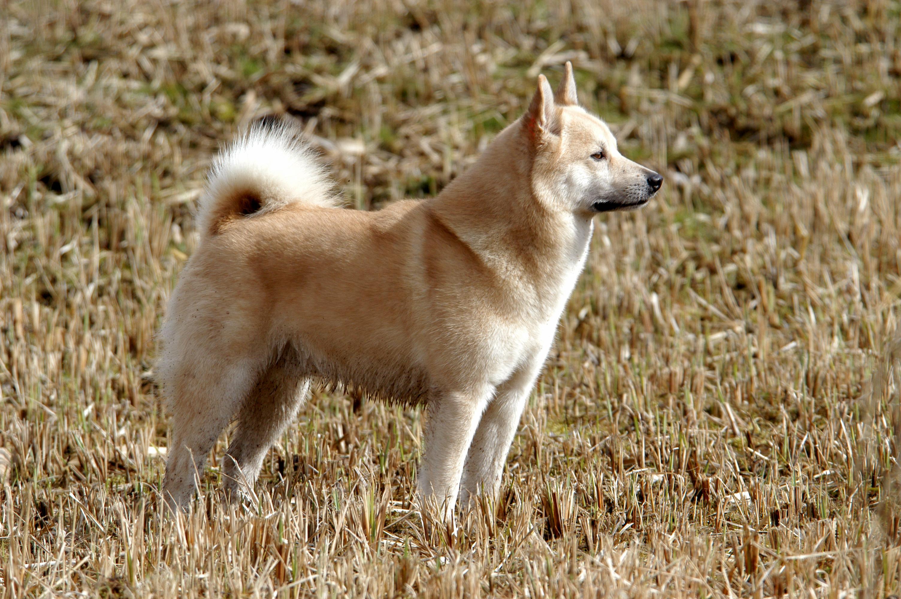 hond van de maand