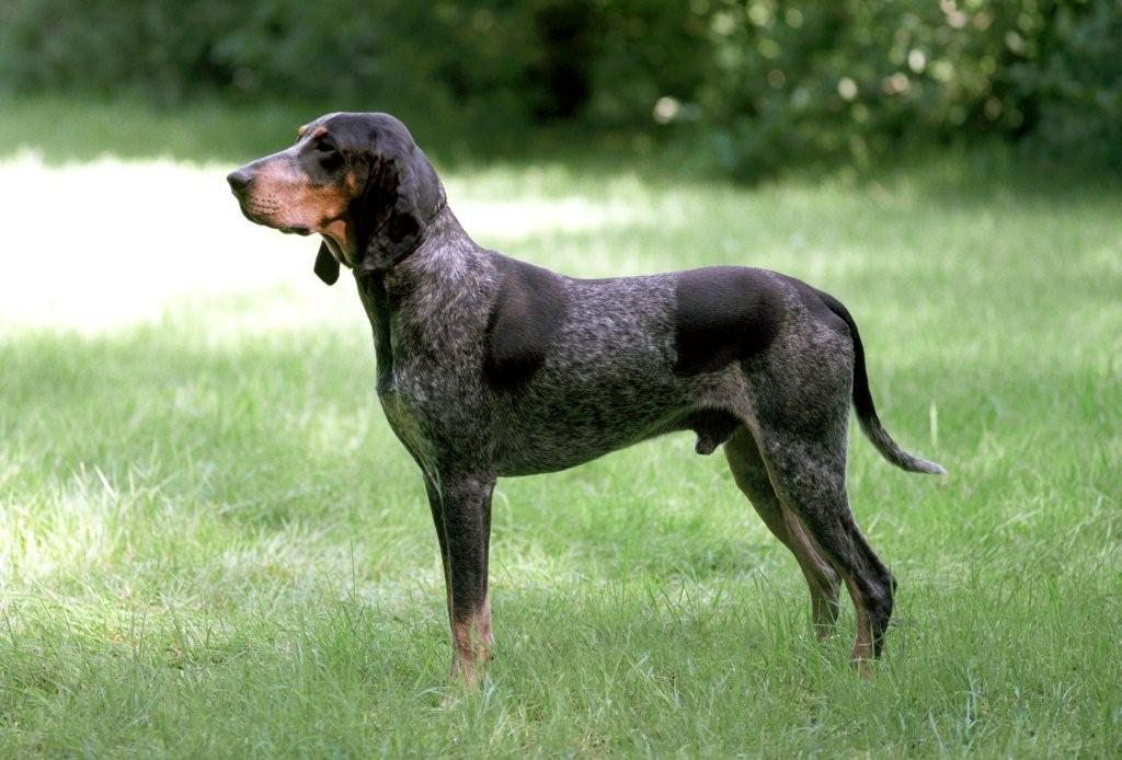 middel hondenrassen