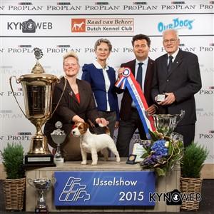 Лучшая собака выставки (BIS) - Победители Международной выставки собак в Зволле (Нидерланды), суббота, 3 октября 2015