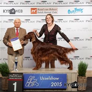 Группа FCI VII - Победители Международной выставки собак в Зволле (Нидерланды), суббота, 3 октября 2015